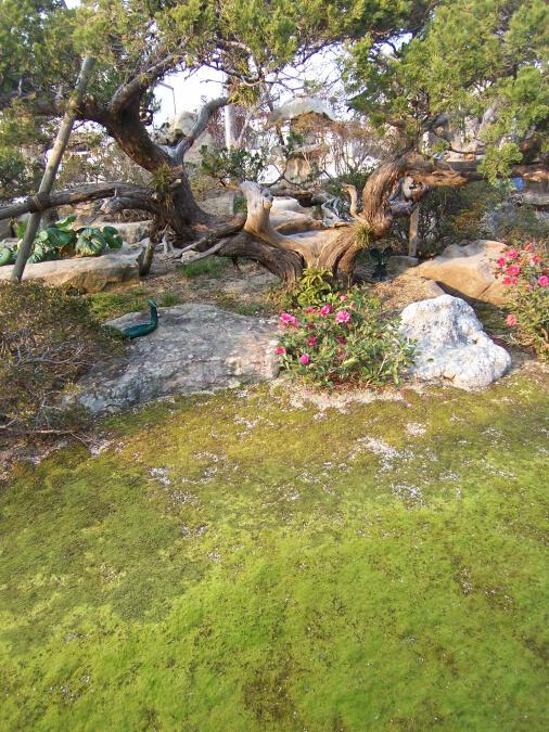 南あわじ市庭園07-03
