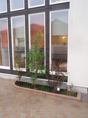 カフェの植栽.jpg